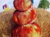 HAUT comme trois  pommes 30x48 octobre 2020